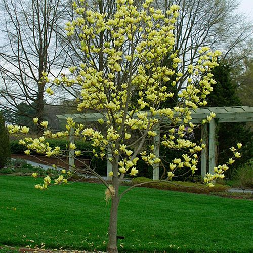 Small Ornamental Trees Nc: 59 Best Images About Backyard Ideas On Pinterest
