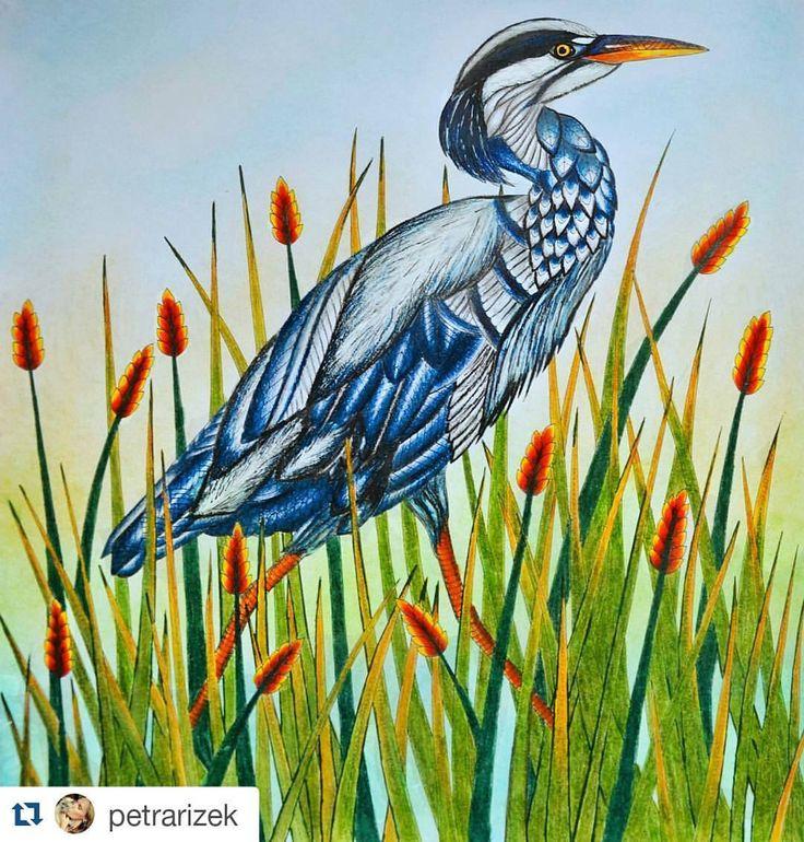 Animalkingdom Animalsbook Coloringbook Colors Color Creative Antistresoveomalovanky Omalovankyprodospele Heron Drawing From Instagram