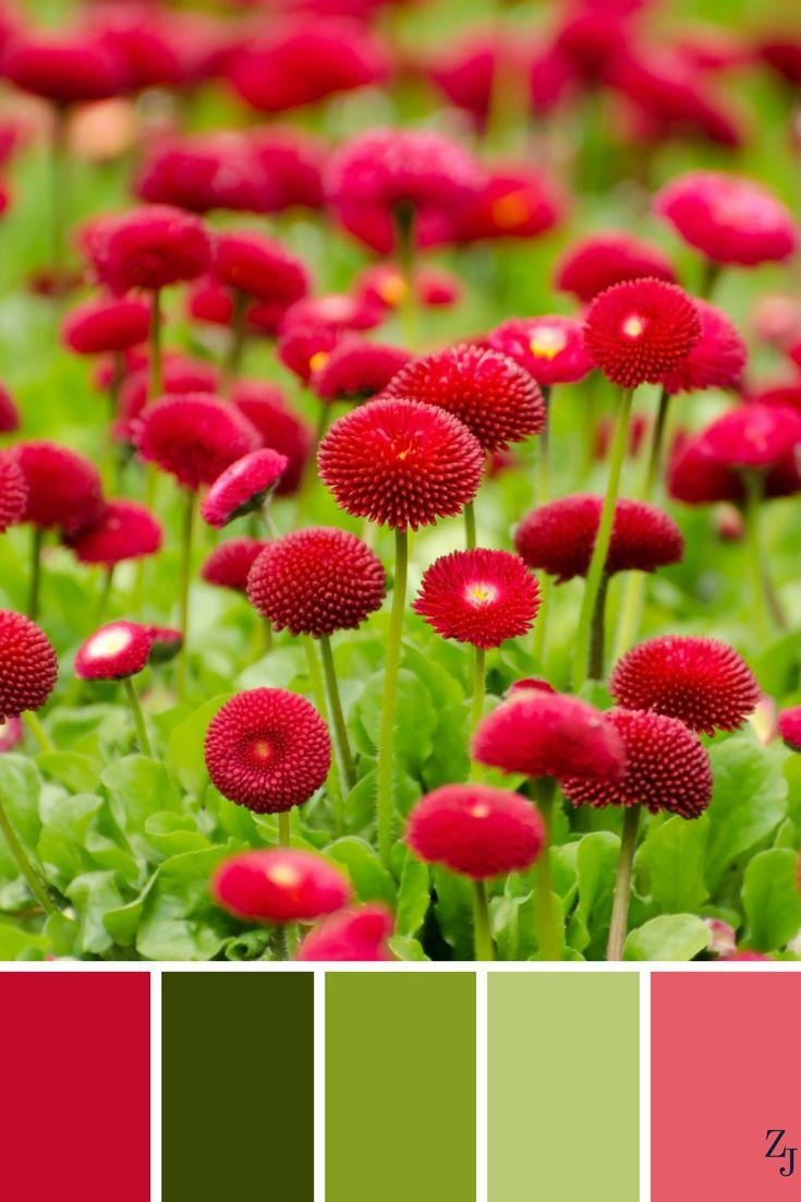 ZJ Colour Palette 183 #colourpalette #colourinspiration