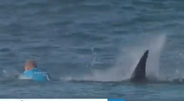 The World Surf League released video of surfer Mick Fanning escaping a shark attack during a competition on July 19, 2015.He didn't cry, at least not till later. Instead, he fought. The near-miraculous escape of champion surfer Mick Fanning, who found himself under attack by a shark on Sunday off the coast of South Africa, has been seen by people around the world. The confrontation took place on live TV, and video showing the dark fin approaching  Fanning, who is 34, and a professional…