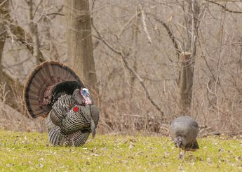 A guide to shot placement when bowhunting turkeys. Bows and Archery Accessories by Mathews