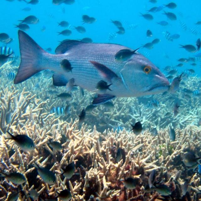 Agin Court Reef Port Douglas Queensland, Australia