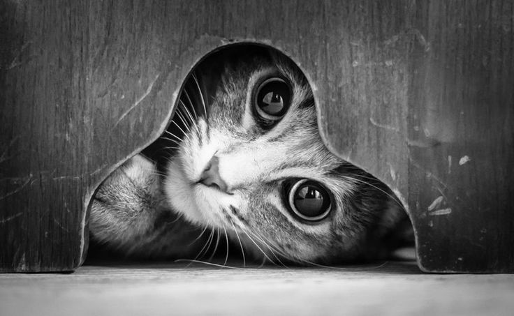 La mystérieuse vie des chats capturée dans de sublimes photos noir et blanc