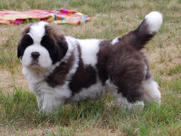 57 best breeds images on pinterest