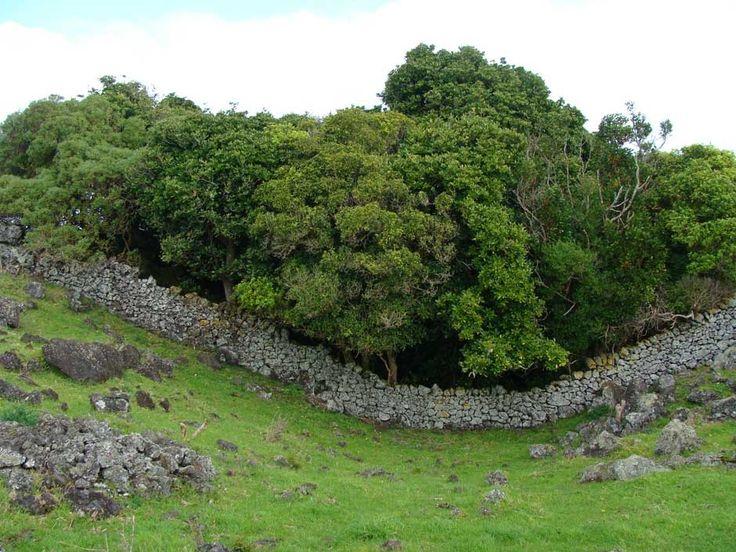 Ōtuataua Stonefields | NZHistory, New Zealand history online