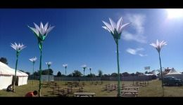 Field of giant lilies