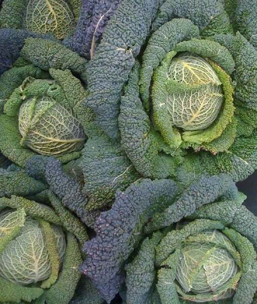 cabbage: Um Cabbages, Jadyn Cabbages, Color, Texture, Vegetables, Cabbages Cakes