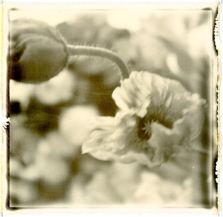 Fleurs, Photo Polaroïd by Hania Destelle