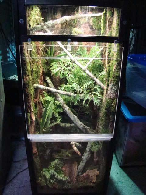 I Finished Hell House Gecko Terrarium Inspiration