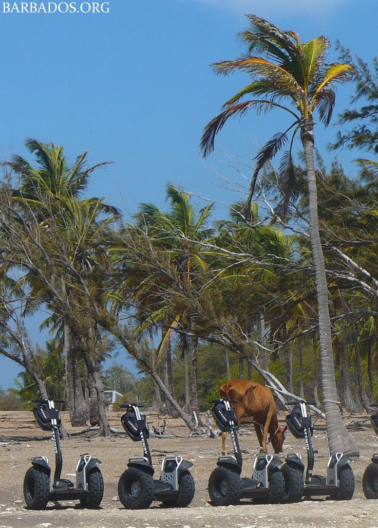 Adventure awaits on the incredible segway tours in the north of Barbados.