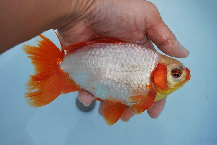545 best Aquaculture images on Pinterest | Fish tanks ...