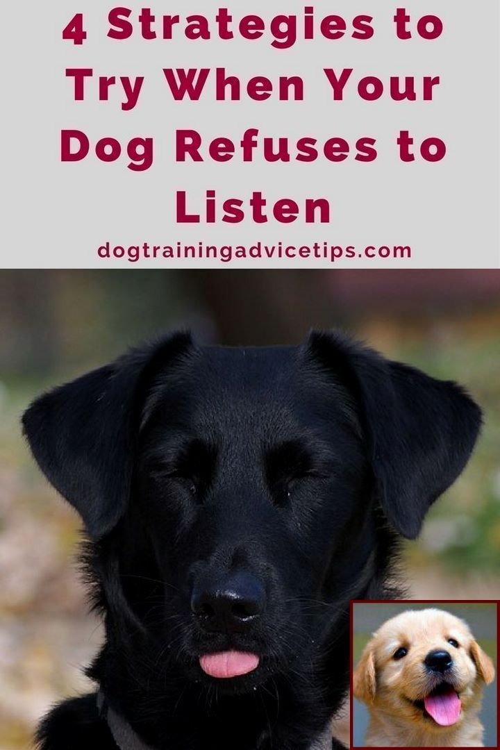 Potty Training A Puppy Near Me And Dog Jumping Behavior Problems