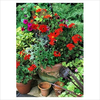 Graham Strong - Red themed Summer display in terracotta pots with Dahlia 'Tally Ho', Pelargonium 'Stadt Bern', Scabiosa atropurpurea 'Chile Black' and Artemisia 'Powis Castle'. Petunia 'Purple Wave' and Nasturtium 'Hermine Grashoff' spill from a chimney pot behind.