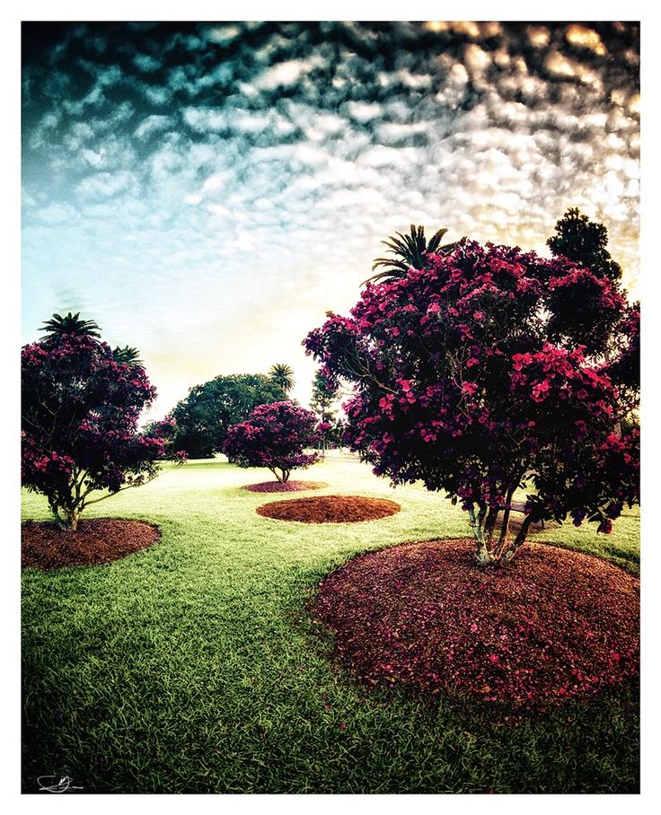 Magic Trees by mdomaradzki.deviantart.com on @deviantART