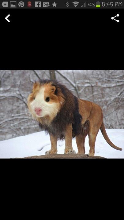 is badoo fake animals