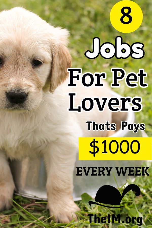 8 Jobs For Pet Lovers That Pay 50 Hour With Images Animal Lover Pets Job