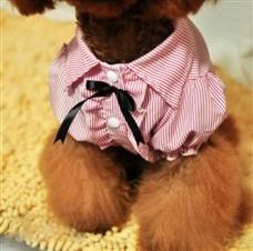 blusa para perros