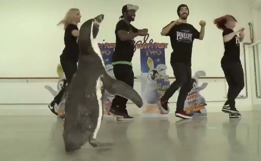 Nice collaboration from Pineapple Dance Studios and Happy Feet