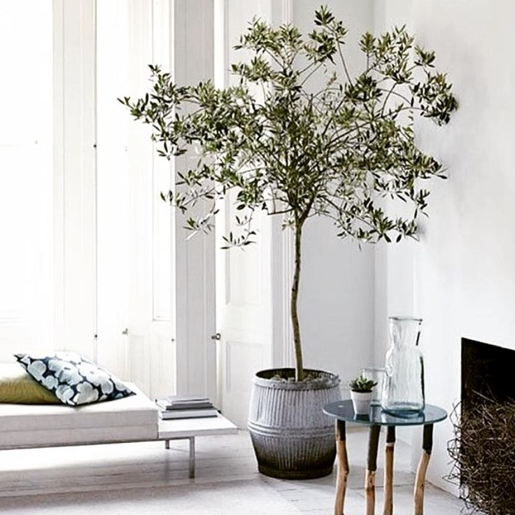 Olive You #interior #inspiration #indoor #olivetree #white #interiordesign #rustic #modern #mediterranean  #chic #architecture #door #window #perfection  #thestylephiles