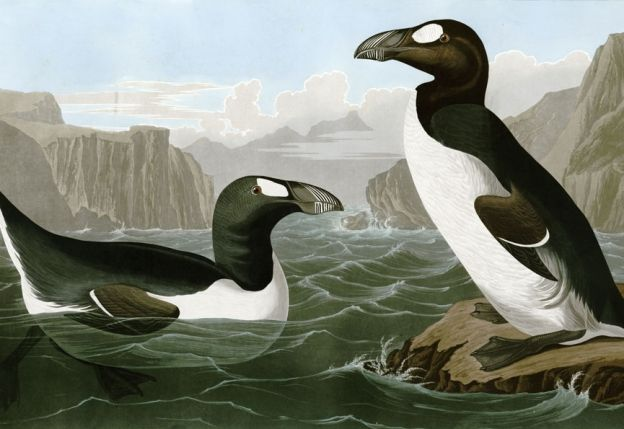 Read an excerpt from The Sixth Extinction: An Unnatural History | Audubon Magazine