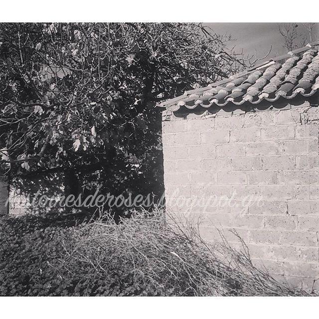 "Histoires De Roses: Ο Κήπος της γιαγιας ""Χειμώνας"" Greece , old house, ermionida, argolida,"