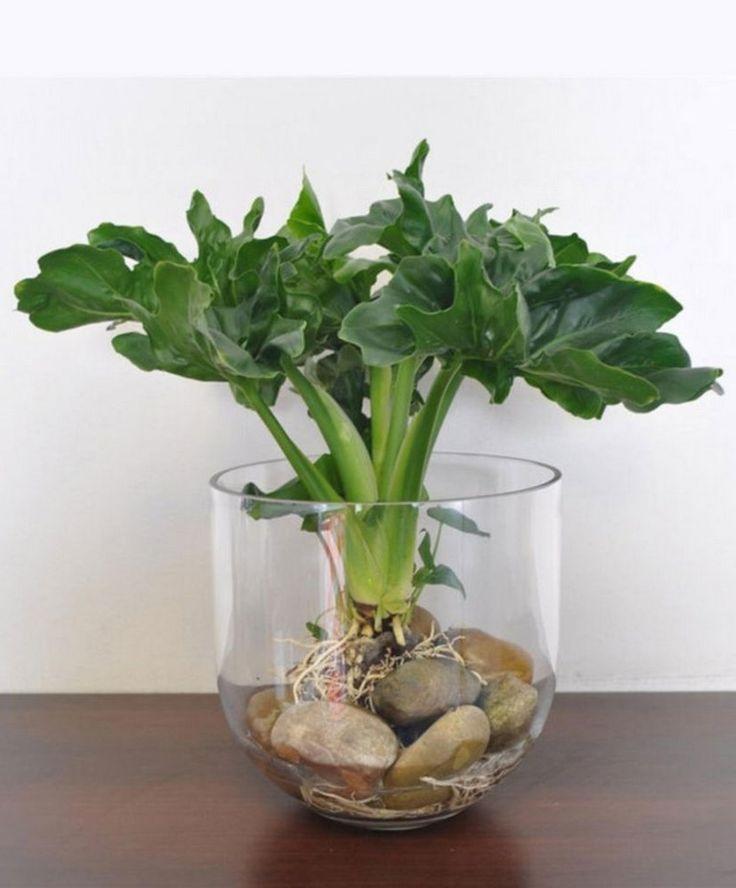 30 Diy Indoor Vessel Water Garden Ideas