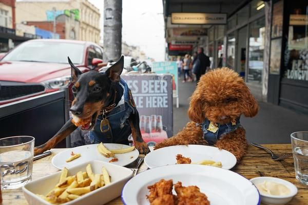Dog Friendly bars Melbourne  www.pethaus.com.au