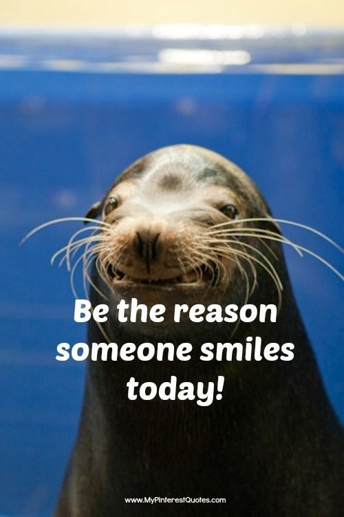 73 best animal smiles images on pinterest fluffy pets - Animal pak motivational quotes ...
