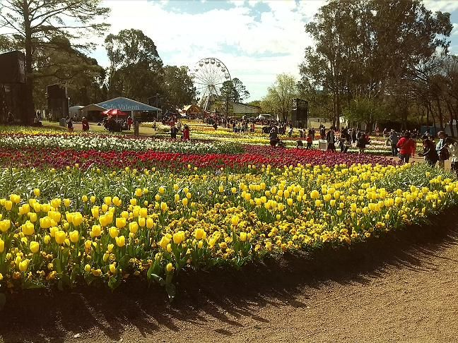 Floriade – Canberra. You are bound to enjoy the varieties of beautifully displayed Tulips. http://www.ozehols.com.au/blog/australian-capital-territory/floriade-canberra/ #Floriade #Canberra #flowers