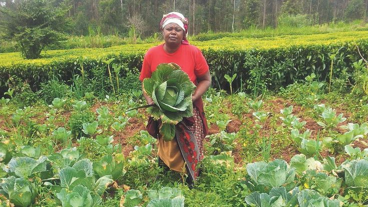 Können Kleinstbauern eine Milliarde Menschen ernähren? – Katie G