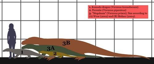 Varanus komodoensis  Wikipedia