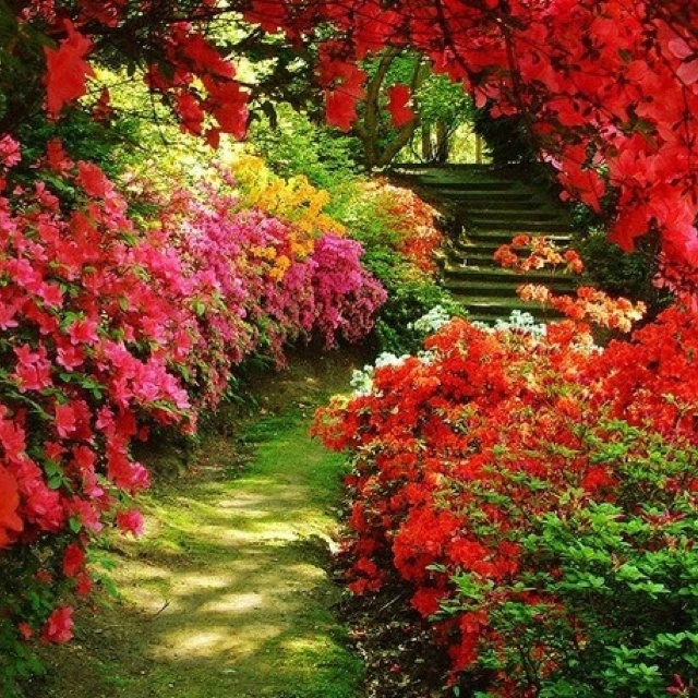 flowery walkways: Secret Gardens, Walks, Red, Color, Gardens Paths, Flower Gardens, Backyard, Pathways, Beauty Gardens