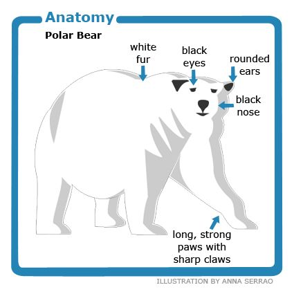 25+ best ideas about Polar bear facts on Pinterest | Polar bears ...