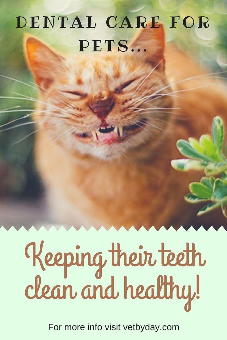 """DENTAL CARE SHOW US THOSE PEARLY WHITES… Animals have become such a core part of our families in this day and age. We love our pets and they live in closer proximity to people now than they did a few years back. Growing up, our dogs always slept in the kitchen or inside laundry room…  Continue reading """"DENTAL CARE"""""""