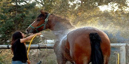 Get Out the Horse Shampoo: Tips on Cleaning Your Horse