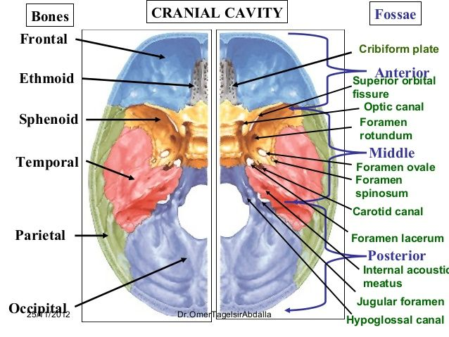 base of the skull foramina contents - Google Search ...