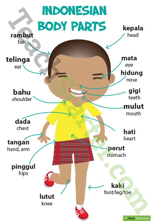 Parts of the Body – Indonesian Language Poster Teaching Resource