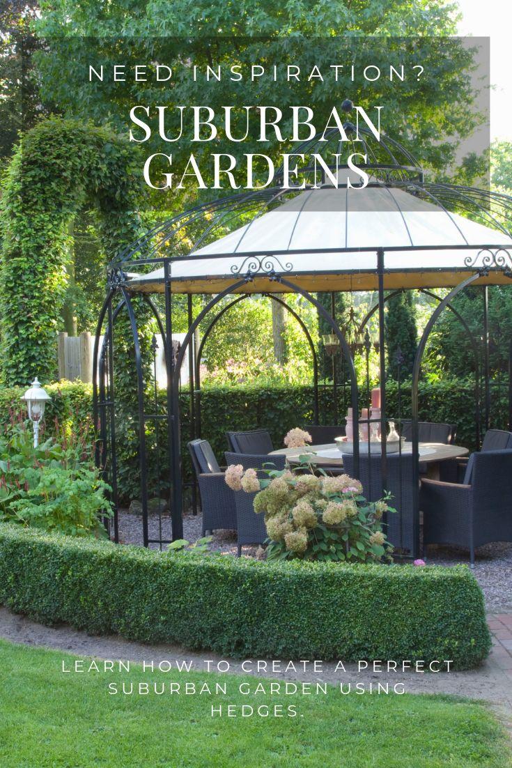 Suburban Garden Ideas   Hedges, Suburban, Garden