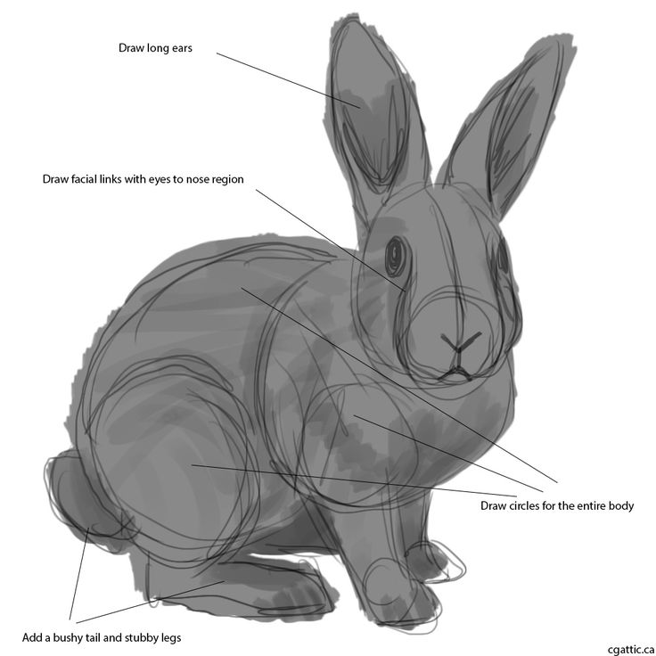 How to draw a rabbit step 1: picture the skeleton underneath as you draw a gesture sketch of the rabbit. Draw two circular lines for the chest and the lower part of the rabbit. Link it together with a nice oval arch to signify the back.For the limbs, the circular form must hint at all the joints of a regular leg.