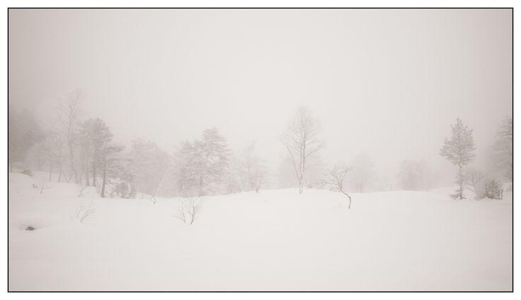 Winter trees III | by Georg Engh