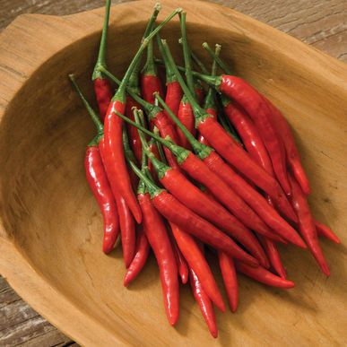 Bangkok Pepper Seeds (Capsicum annuum) + FREE Bonus 6 Variety Seed Pack - a $30 Value!