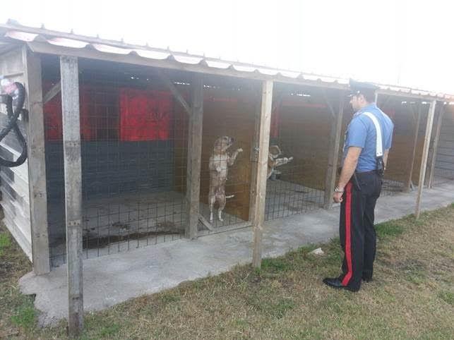 Cani senza microchip e tra le lamiere: chiuso canile choc a cura di Redazione - http://www.vivicasagiove.it/notizie/cani-senza-microchip-e-tra-le-lamiere-chiuso-canile-choc/