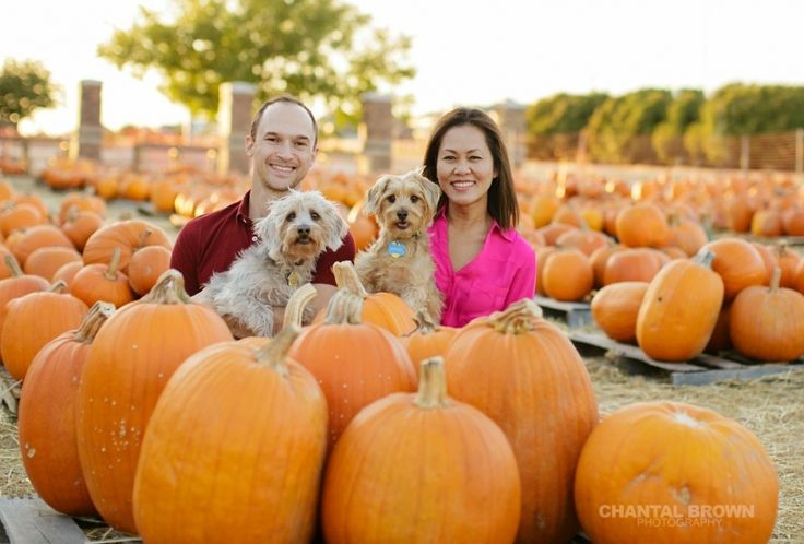 My adorable family!  Dallas family pet, puppies annual pumpkin patch portrait taken by Chantal Brown Photography in Murphy, Texas