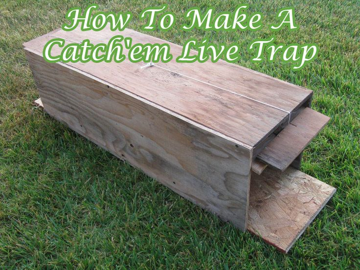 How to make a catchem live trap animal traps small