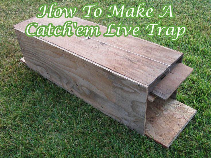 How To Make A Catch'em Live Trap Animal traps, Small