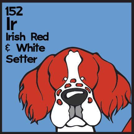 The 152nd Elemutt of The Dog Table is the Irish Red and White Setter.  The Dog Table Poster features illustrations of 186 dog breeds. Dogs are organized in a similar layout and structure to the Periodic Table.  #dogsofpinterest #IrishRedandWhiteSetter BUY THE DOG TABLE POSTER  http://thedogtable.com