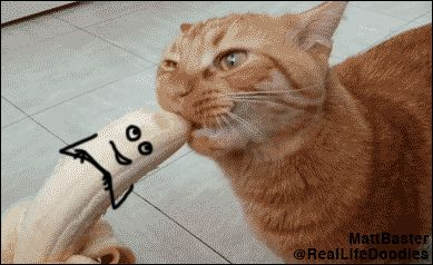 Haha you're going to get a kick out of this one! GIF animados – Buscar y Compartir en GIPHY