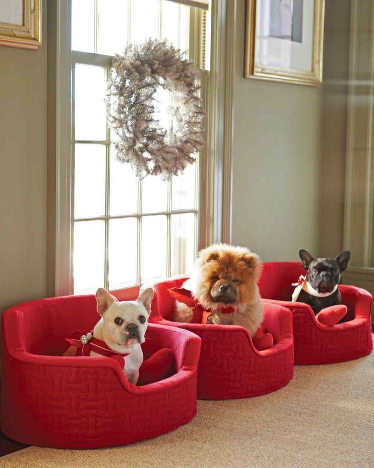 1000+ ideas about Martha Stewart Pets on Pinterest | Dog ...