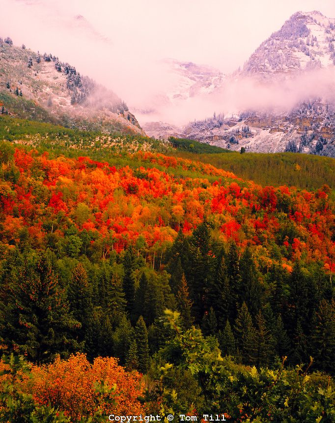 Oaks and maples in autumn - Clearing Storm, Mt. Timpanogos, Utah,   Wasatch Mountains - Uinta National Forest