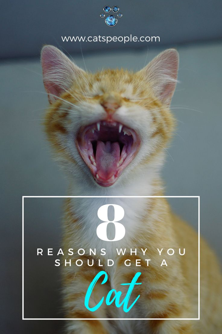 8 Reasons Why You Should Get A Cat Cats, Cat facts, Cat